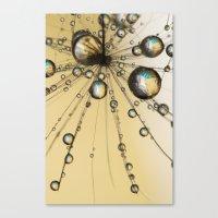 Single Dandy Seed Web Drops Canvas Print