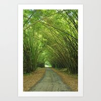 Bamboo Cathedral  Art Print