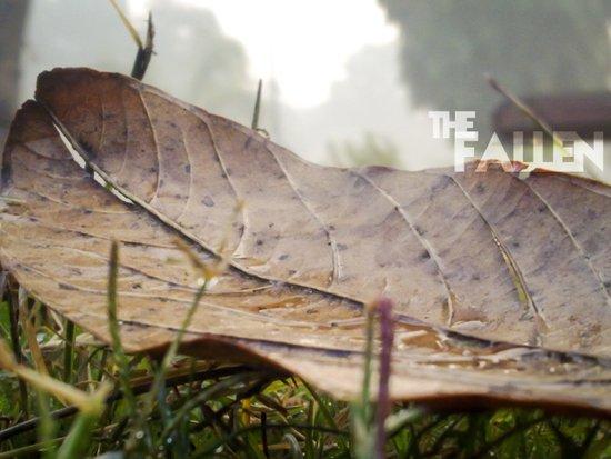 Dew drops on a fallen leaf Art Print
