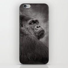 Gorilla. Silverback. BN iPhone & iPod Skin