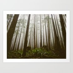 Rainforest of the Pacific Northwest Art Print