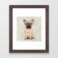 Mr French Bulldog Framed Art Print