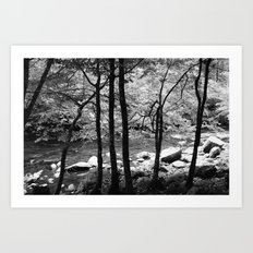 Creek through the Trees Art Print