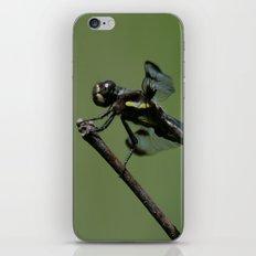 Twelve-spotted Skimmer iPhone & iPod Skin