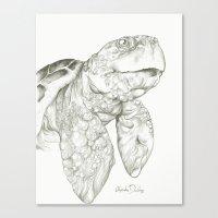 Tulisa the Turtle  Canvas Print