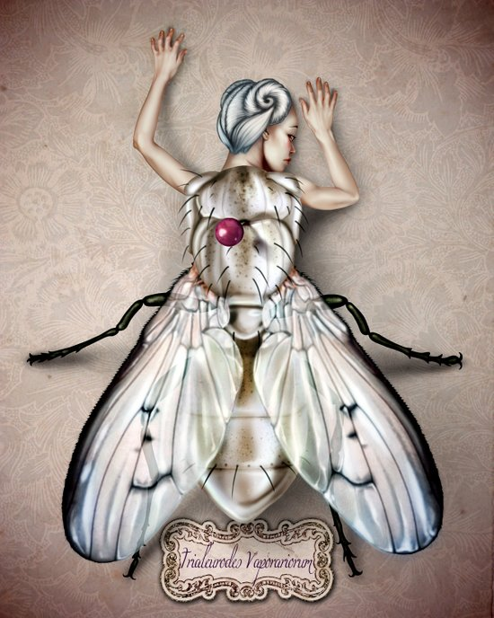 White Fly Canvas Print