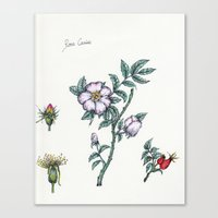 Plants & Herbs Edition Canvas Print