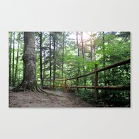 Mystic woods Canvas Print