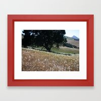 California Live Oak Framed Art Print