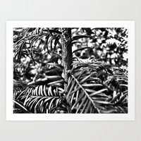 Sapling Art Print