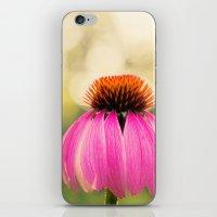 Pink Coneflower iPhone & iPod Skin