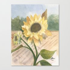 Sunflower Morning Canvas Print
