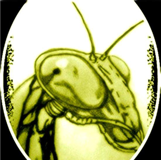 MANTIS 01 Yellow Art Print