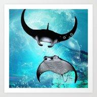 Manta Rays Art Print