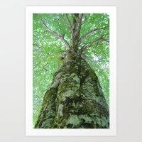 Old Growth Tree Art Print