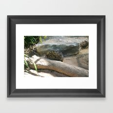 Echinda Framed Art Print