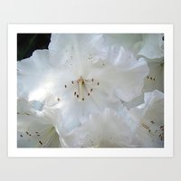White Satin Art Print