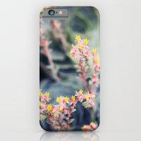Echeveria #2 iPhone 6 Slim Case
