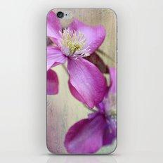 purple clematis  iPhone & iPod Skin