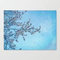 Blossom Blue Canvas Print