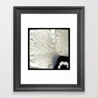 FLOWER 019 Framed Art Print