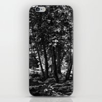 Through The Trees iPhone & iPod Skin