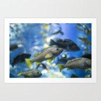 In The Tank: Fish 1 Art Print