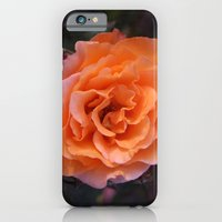 Holland Park Rose iPhone 6 Slim Case
