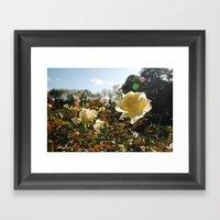 Rose Garden Sunshine Framed Art Print