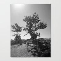 Dancing Tree Canvas Print