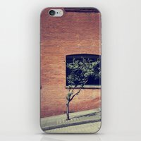 Tree on a Hill iPhone & iPod Skin