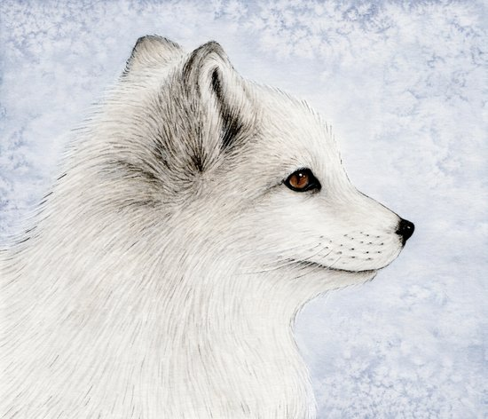 Polar Fox Profile Art Print