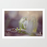 Snow Drop Art Print