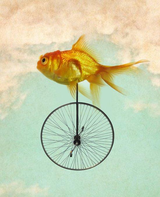 unicycle goldfish Art Print