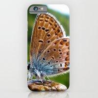 Teton Moth iPhone 6 Slim Case