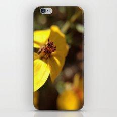 Sunny iPhone & iPod Skin