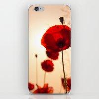 Poppy Flower In The Sun iPhone & iPod Skin