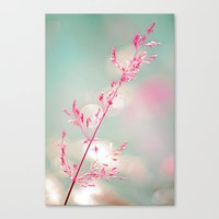 Pink haze Canvas Print