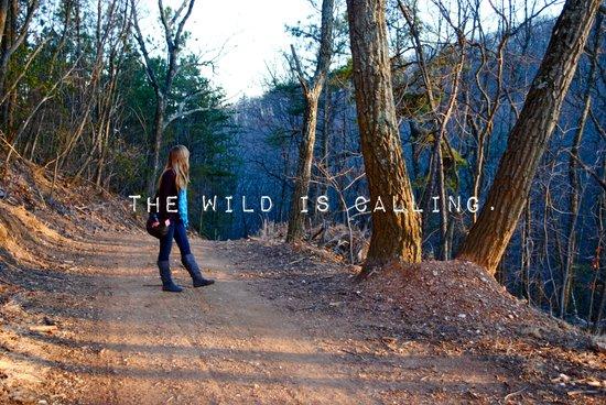 The Wild Is Calling. Art Print