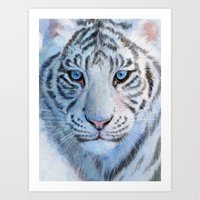 White Tiger Cub 852 Art Print