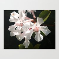 Candy in the Sun Canvas Print