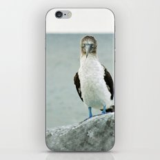blue-footed booby iPhone & iPod Skin
