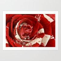 Velvet Ripple Rose Art Print