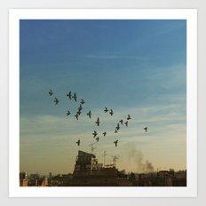 flying birds Art Print