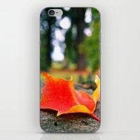 Cemetery Autumn Leaf iPhone & iPod Skin