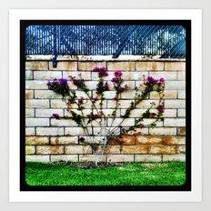 Flowers on a wall. Art Print
