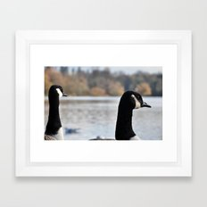 Geese outlook Framed Art Print