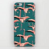 tropical flamingos  iPhone & iPod Skin