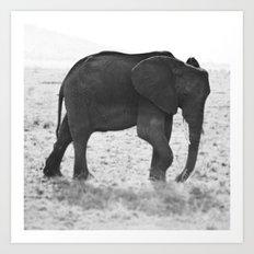 An Elephant Calf Art Print