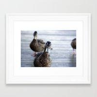 Curious duck Framed Art Print